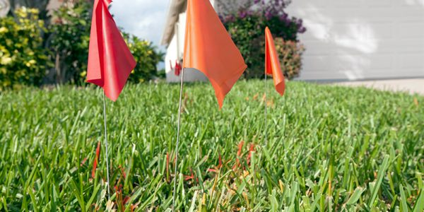 Canva---Flags-marking-underground-utilities